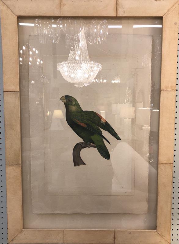 Anna's Mostly Mahogany Consignment - Pr Watercolor Parrots